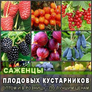 Купить саженцы плодовых кустарники разных сортов