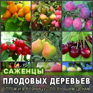 Купить саженцы плодовых деревьев разных сортов